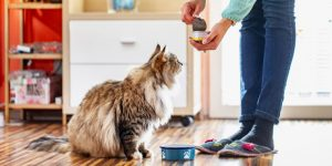 Tips for training cats